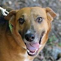 Adopt A Pet :: Shae - Suwanee, GA