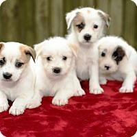 Adopt A Pet :: Gertie's Boys- - Alvin, TX