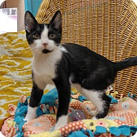Adopt A Pet :: Quinn - Addison, IL