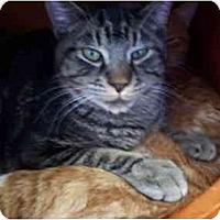 Adopt A Pet :: Taz - El Cajon, CA