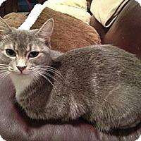 Adopt A Pet :: Lauren - East Hanover, NJ