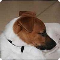 Adopt A Pet :: SOCKS - Scottsdale, AZ