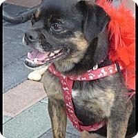 Adopt A Pet :: Coco Bean - Lake Forest, CA