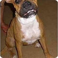 Adopt A Pet :: Tinkerbell - Brunswick, GA