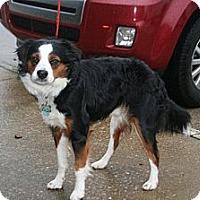 Adopt A Pet :: Lance - Alexandria, VA