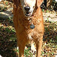 Adopt A Pet :: Brandea - St Louis, MO