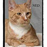 Adopt A Pet :: Ned - Warren, PA