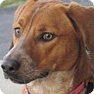 Adopt A Pet :: Tracie