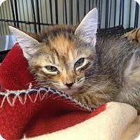 Adopt A Pet :: Bell - Island Park, NY