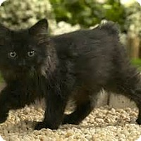 Adopt A Pet :: Casey - Brockton, MA