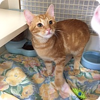Adopt A Pet :: Rupert - La Canada Flintridge, CA