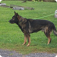 Adopt A Pet :: DAVON - Tully, NY