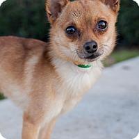 Adopt A Pet :: Firebird - San Diego, CA