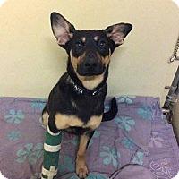 Adopt A Pet :: Ben - Rexford, NY