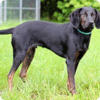 Adopt A Pet :: Buddy II - Waldorf, MD