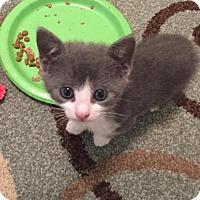 Adopt A Pet :: Sara - Ocala, FL