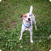 Adopt A Pet :: Skippy - Fayetteville, NC