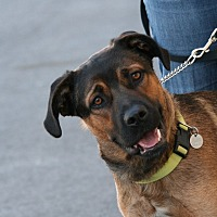 Shepherd (Unknown Type)/Rottweiler Mix Dog for adoption in Palmdale, California - Bruno