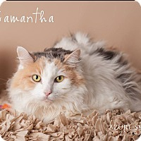 Calico Cat for adoption in Gilbert, Arizona - Samantha