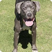 Adopt A Pet :: Dallas - Palm Springs, CA