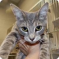 Adopt A Pet :: Nikki - Henderson, NC