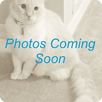 Adopt A Pet :: Thackery - Georgetown, TX
