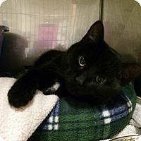 Adopt A Pet :: Benton - Byron Center, MI