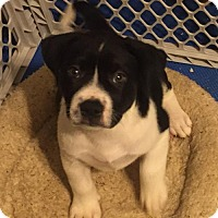 Adopt A Pet :: Rex - Los Banos, CA