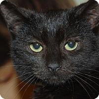 Adopt A Pet :: Norman - Whittier, CA