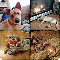 Adopt A Pet :: Grady - Hope, BC