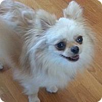Adopt A Pet :: Triscuit - Dayton, OH