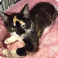Adopt A Pet :: Velma - Byron Center, MI