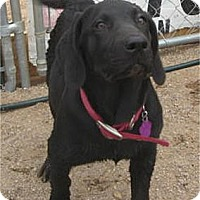 Adopt A Pet :: Jenna - Golden Valley, AZ