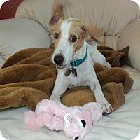 Adopt A Pet :: Tatianna - Phoenix, AZ