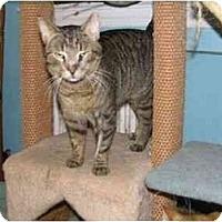 Adopt A Pet :: BJ  (RP) - Little Falls, NJ