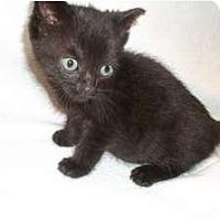 Adopt A Pet :: Elvira - Acme, PA
