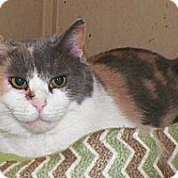 Adopt A Pet :: Molly - Dover, OH