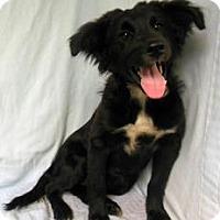 Adopt A Pet :: Betty - Gary, IN