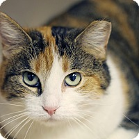 Adopt A Pet :: Cutie Pie in the Sky - Chicago, IL