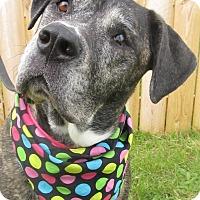 Adopt A Pet :: Tasha - Menomonie, WI