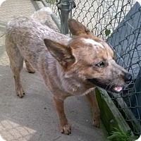 Adopt A Pet :: Jaxson - Oberlin, OH