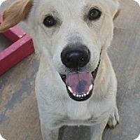 Adopt A Pet :: Waylon - san antonio, TX