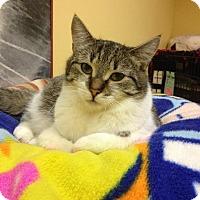 Adopt A Pet :: Jethro - Blasdell, NY