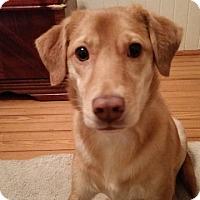 Adopt A Pet :: Naveen - Alexandria, VA