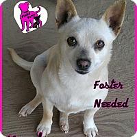 Adopt A Pet :: Kadence - Fowler, CA