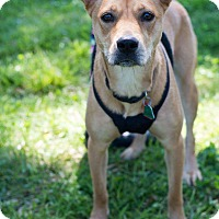 Adopt A Pet :: Lucky - Arlington, TN