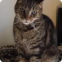 Adopt A Pet :: Jackson - Worcester, MA
