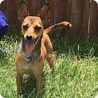 Adopt A Pet :: Rita - Norwalk, CT