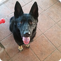 Adopt A Pet :: Abby - Peoria, AZ
