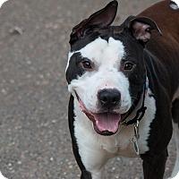 Adopt A Pet :: Carlos - Des Peres, MO